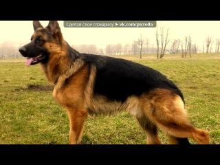 «С моей стены» под музыку Dosa - История про одного пса. Picrolla